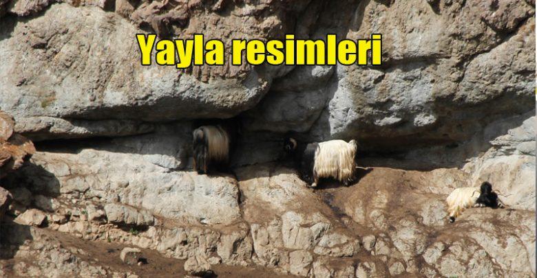 Photo of Yayla resimleri