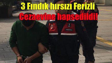 Photo of Fındık Hırsızları Yakalandı.