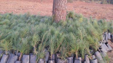 Photo of Ağaç ekim çalışmaları hızla sürüyor