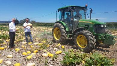 Photo of TÜİK, Tarım ürünleri üretici fiyatı %22-64 arttı