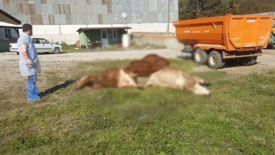 Photo of Büyükbaş Hayvan çiftliğinde ölü sayısı 83 oldu