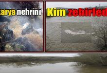 Photo of Sakarya nehrini yine kim zehirledi?