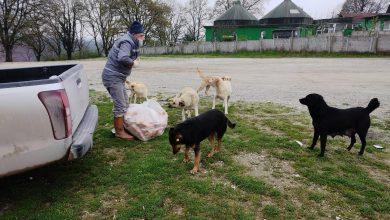 Photo of Sokak hayvanlarına Büyükşehirin yardım eli