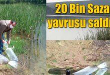 Photo of Nalköy Göletine 20bin Yavru Balık bırakıldı