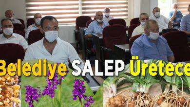 Photo of Ferizli Belediyesi salep yetiştirecek