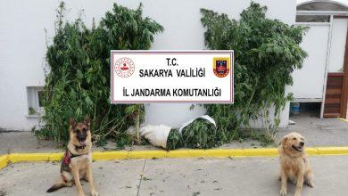 Photo of Dört Koldan Uyuşturucu Operasyonu…